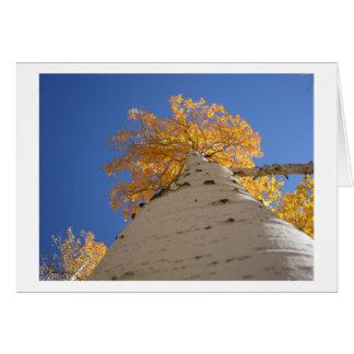 Olhando acima o cartão da árvore de Aspen