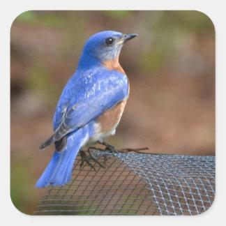 Olhe o Bluebird trazer a felicidade! Adesivo Em Forma Quadrada