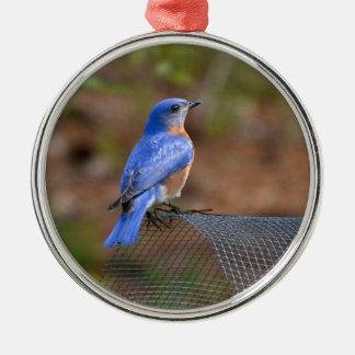 Olhe o Bluebird trazer a felicidade! Ornamento Para Arvores De Natal