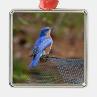 Olhe o Bluebird trazer a felicidade! Enfeites