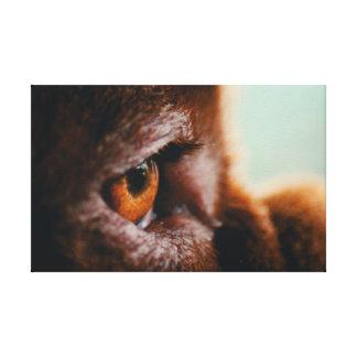 Olho francês do Mastiff das canvas (macro)