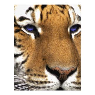 Olhos azuis animais do impressão do tigre de Benga Papel De Carta Personalizados