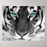 Olhos brancos do poster do tigre