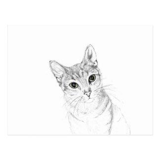 Olhos de gato um desenho de lápis cartão postal
