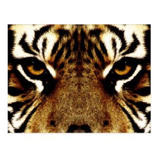 Olhos de um tigre cartão postal