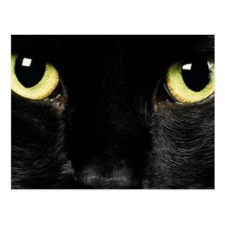 Olhos do gato cartão postal