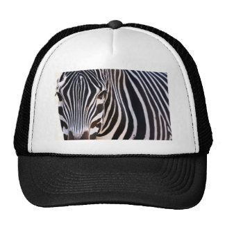 Onde está a zebra? boné