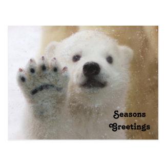 Ondulação bonito de Cub de urso polar Cartão Postal
