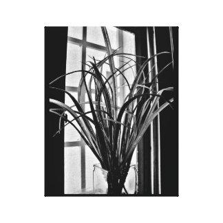 Opinião da planta da janela impressão em canvas