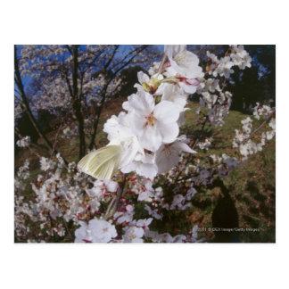 Opinião de Fisheye a borboleta na flor Cartão Postal