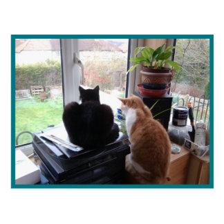 Opinião dos gatos do cartão 8 da foto - beleza