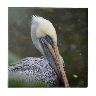 opinião marrom da cabeça do pelicano que enfrenta