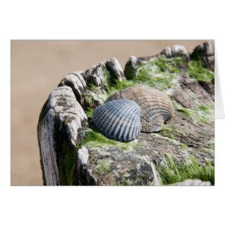 Opiniões do beira-mar - escudos cartão comemorativo