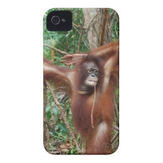Orangotango bonito do Redhead na pose do Pinup Capa Para iPhone