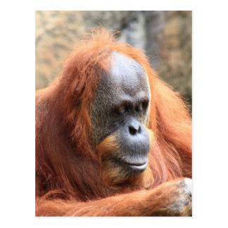 Orangotango Cartão Postal