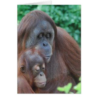 Orangotango do bebê com cartão da mãe
