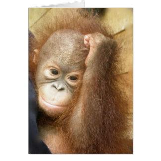 Orangotango do bebê dos animais selvagens (versão cartão