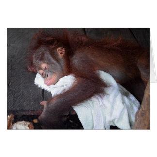 Orangotango infantil que dorme em Bornéu Cartão Comemorativo