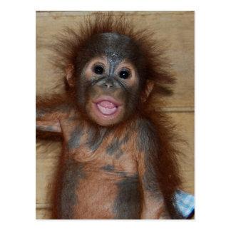 Orangotango precioso do bebê nas fraldas no orfana cartão postal