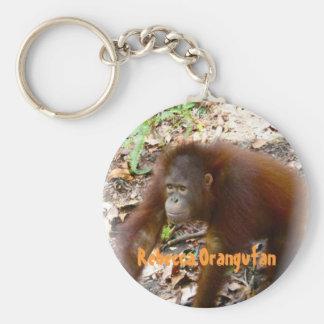 Orangotango Rebecca em Bornéu Chaveiro