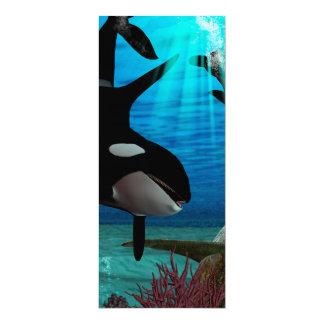 Orcas engraçadas