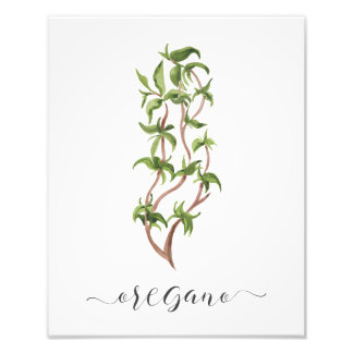 Oregano botânico do impressão da erva da aguarela foto