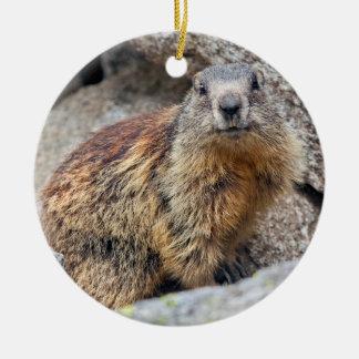 Ornamento alpino da marmota