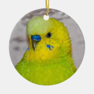 Ornamento amarelo de Budgie