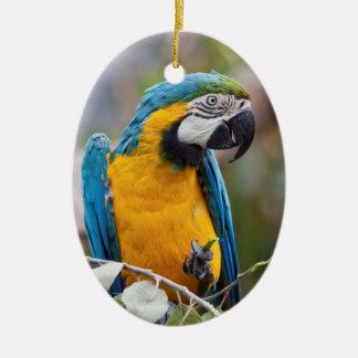 Ornamento azul e amarelo do Macaw