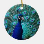 Ornamento bonito do pavão