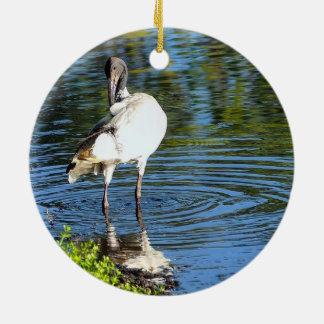 Ornamento branco australiano dos íbis