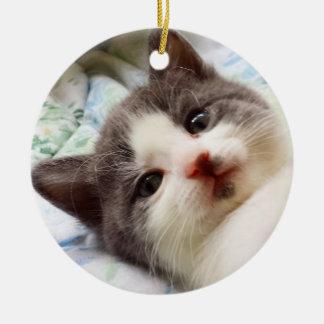 Ornamento cinzento & branco do gatinho