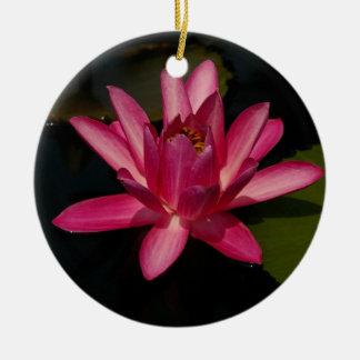 Ornamento cor-de-rosa da flor de Lotus Waterlily