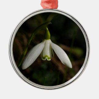 Ornamento da flor de Snowdrop