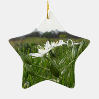 Ornamento De Cerâmica A estrela de Bethlehem floresce o umbellatum do