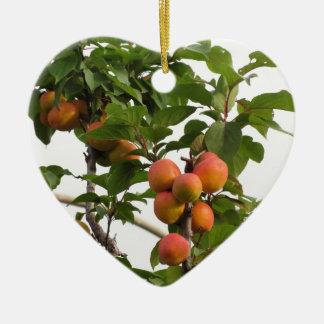 Ornamento De Cerâmica Abricós maduros que penduram na árvore. Toscânia,
