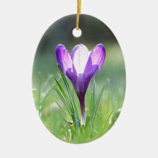 Ornamento De Cerâmica Açafrão roxo no primavera 03,3