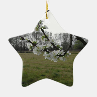 Ornamento De Cerâmica Ameixa de florescência. Árvore branca de