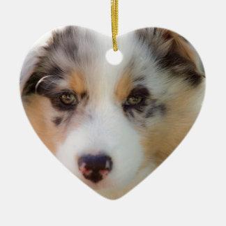 Ornamento De Cerâmica Australian shepherd puppy