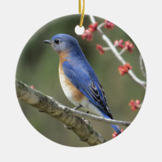 Ornamento De Cerâmica Bluebird