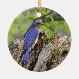 Ornamento De Cerâmica Bluebird oriental