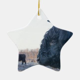 Ornamento De Cerâmica Cabeça do escocês escocês do touro preto com vaca