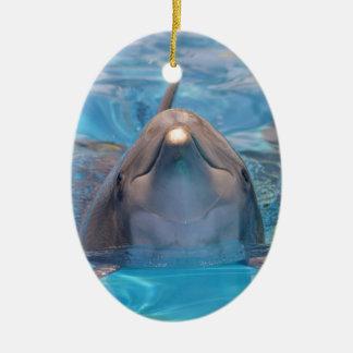 Ornamento De Cerâmica Cabeça do golfinho de bottlenose