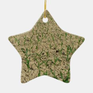 Ornamento De Cerâmica Campo do milho do milho verde na fase inicial