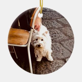 Ornamento De Cerâmica Cão de FullSizeRender 18Shy