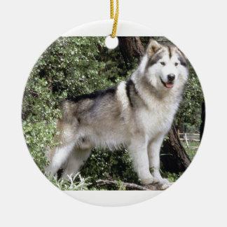 Ornamento De Cerâmica Cão do Malamute do Alasca