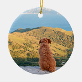 Ornamento De Cerâmica Cão só que olha no passo de Gibraltar