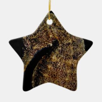 Ornamento De Cerâmica Cavalo marinho