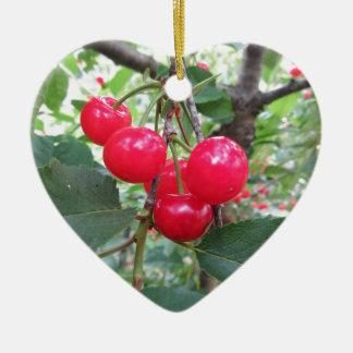 Ornamento De Cerâmica Cerejas vermelhas de Montmorency na árvore no