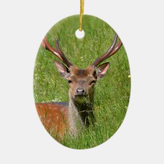Ornamento De Cerâmica Cervos de fallow do fanfarrão na grama